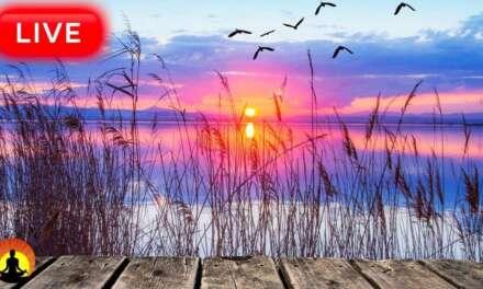 🔴 Relaxing Sleep Music 24/7, Calm Music, Sleeping Music, Yoga, Zen, Meditation, Study Music, Sleep