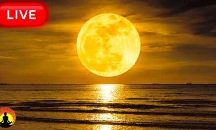 🔴 Relaxing Sleep Music 24/7, Healing Music, Yoga, Meditation, Sleeping Music, Study Music, Sleep