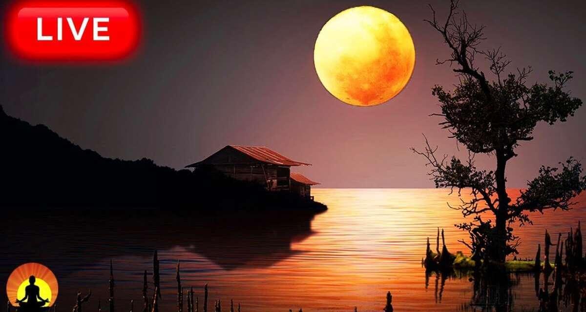 🔴 Relaxing Sleep Music 24/7, Calm Music, Yoga, Sleep Meditation, Insomnia, Spa, Study Music, Sleep