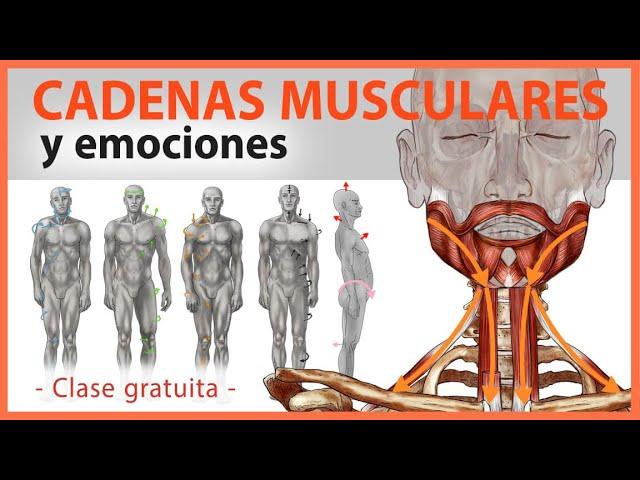 🛑 CADENAS MUSCULARES Y Emociones 👉Artrosis, Dolor Lumbar Y Cervical, Contracturas – Yoga Terapeutico