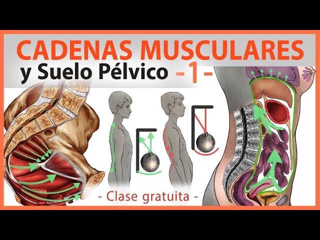 🛑 CADENAS MUSCULARES Y Suelo Pélvico 👉 Yoga Terapeutico, Fisioterapia, Episiotomia, Incontinencia